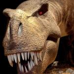 Exhibit reuse: Dinosaurs animatronic models and replica skeletons